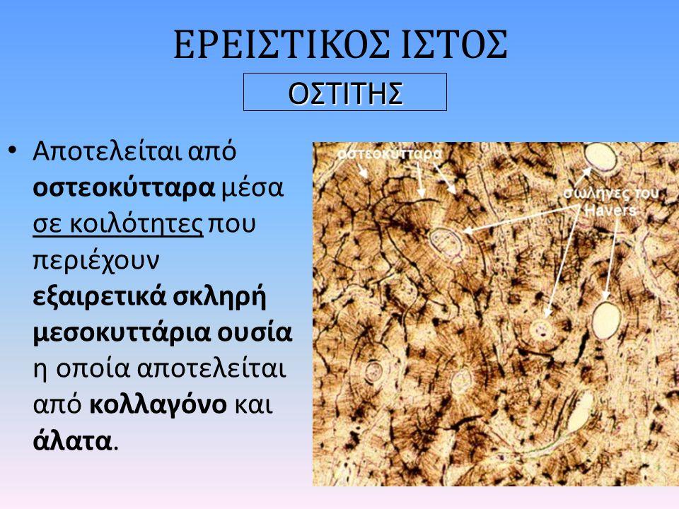 ΕΡΕΙΣΤΙΚΟΣ ΙΣΤΟΣ ΟΣΤΙΤΗΣ