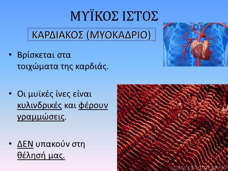 ΚΑΡΔΙΑΚΟΣ (ΜΥΟΚΑΔΡΙΟ)