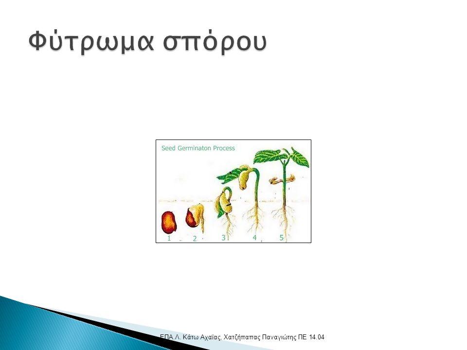 Φύτρωμα σπόρου ΕΠΑ.Λ. Κάτω Αχαΐας, Χατζήπαπας Παναγιώτης ΠΕ 14.04