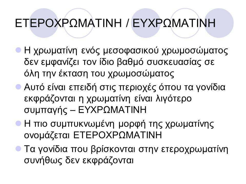 ΕΤΕΡΟΧΡΩΜΑΤΙΝΗ / ΕΥΧΡΩΜΑΤΙΝΗ