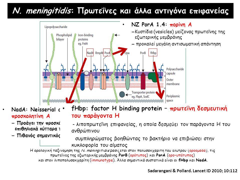 N. meningitidis: Πρωτεΐνες και άλλα αντιγόνα επιφανείας