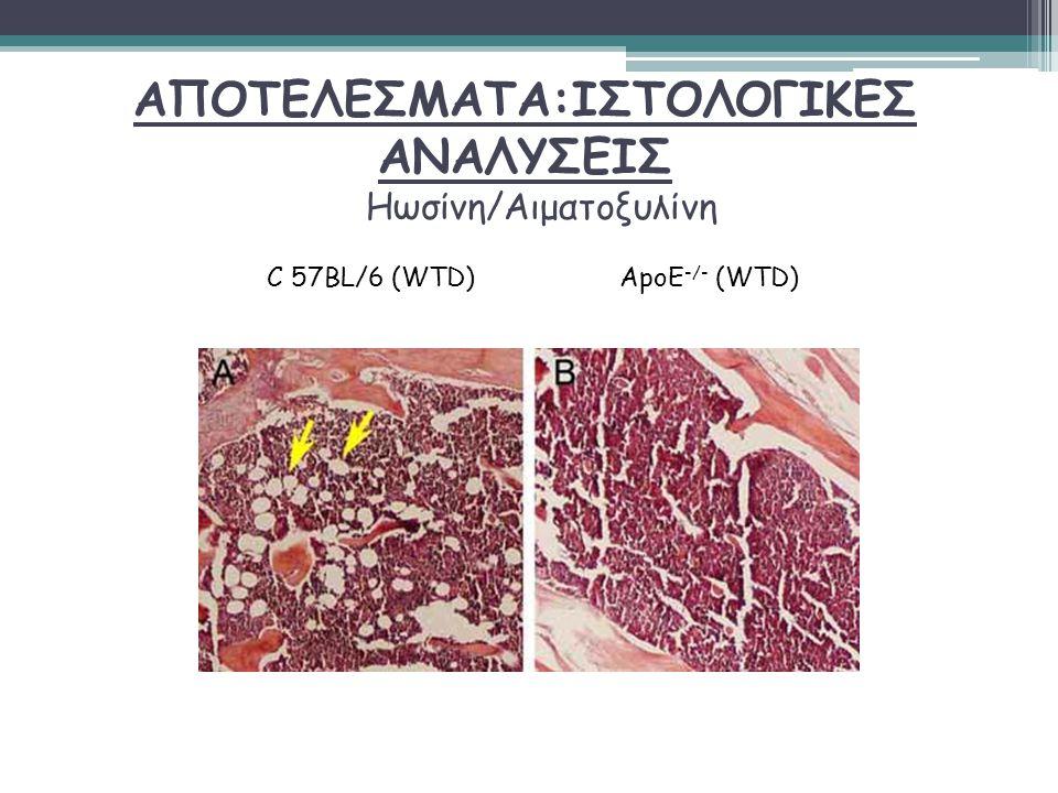 ΑΠΟΤΕΛΕΣΜΑΤΑ:ΙΣΤΟΛΟΓΙΚΕΣ ΑΝΑΛΥΣΕΙΣ Ηωσίνη/Αιματοξυλίνη