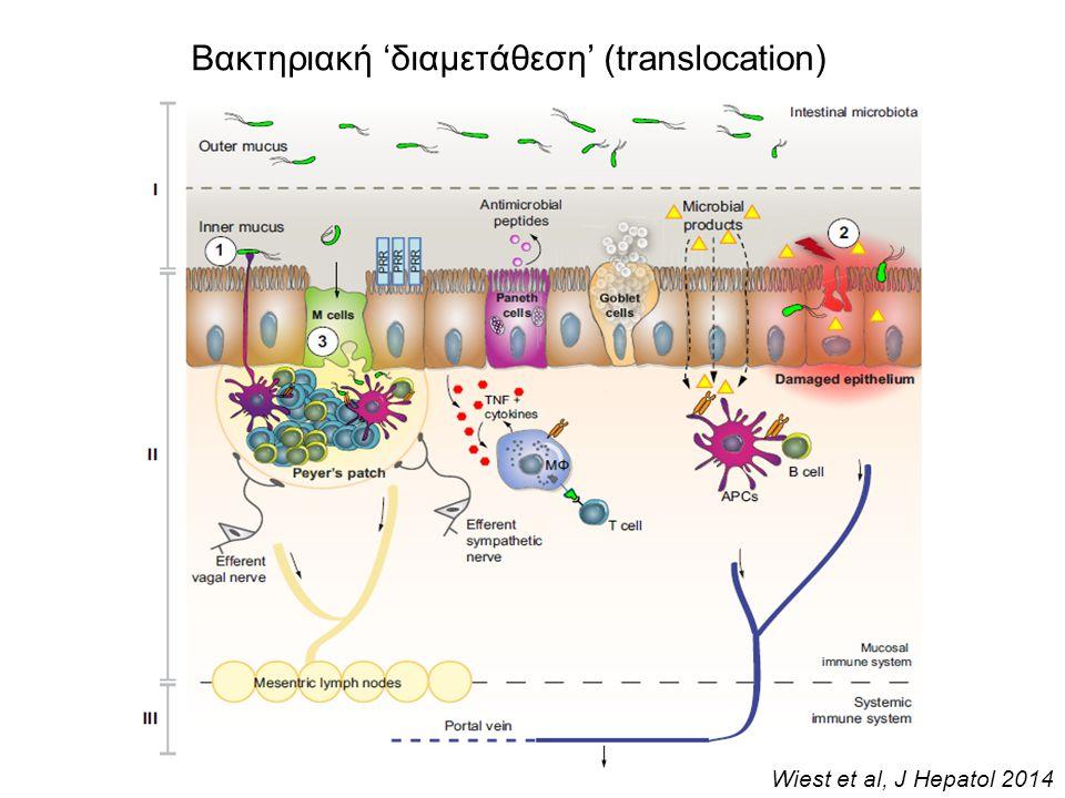 Βακτηριακή 'διαμετάθεση' (translocation)
