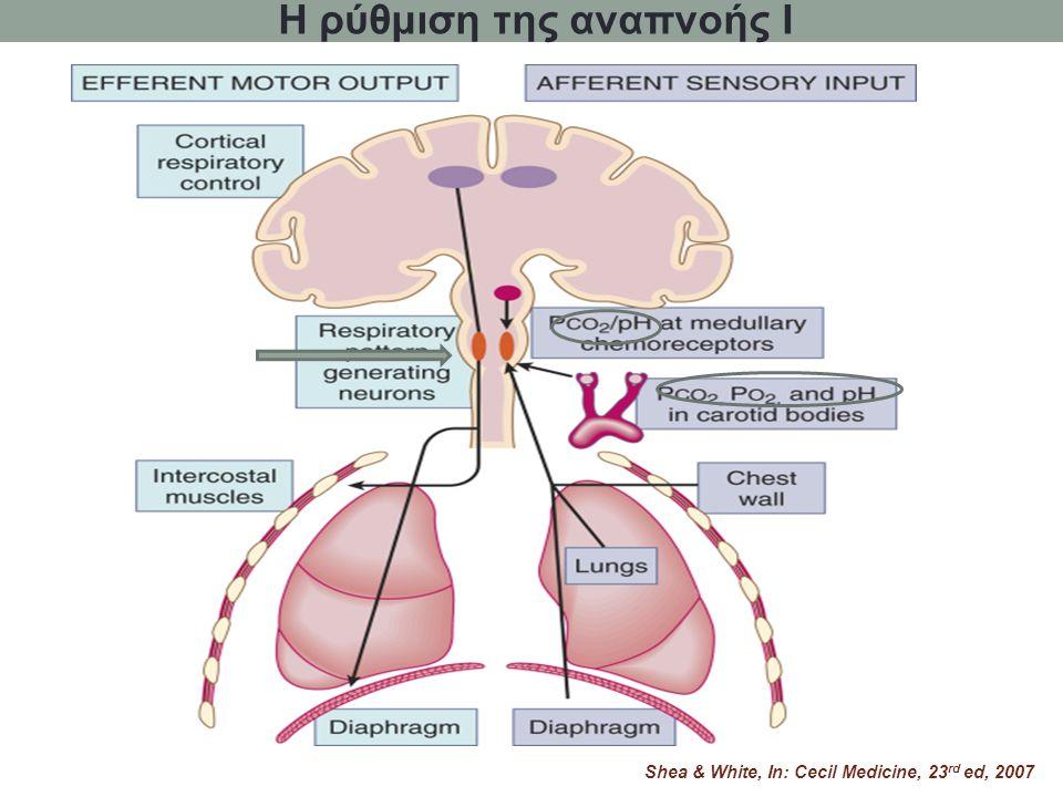 Η ρύθμιση της αναπνοής I