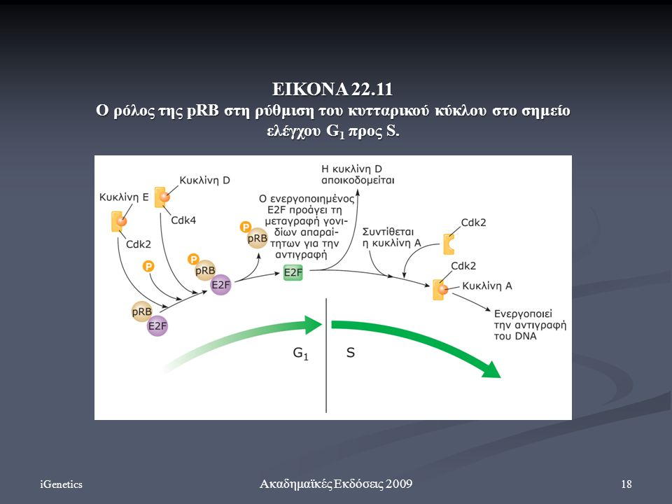 ΕΙΚΟΝΑ 22.11 Ο ρόλος της pRB στη ρύθμιση του κυτταρικού κύκλου στο σημείο ελέγχου G1 προς S. iGenetics.