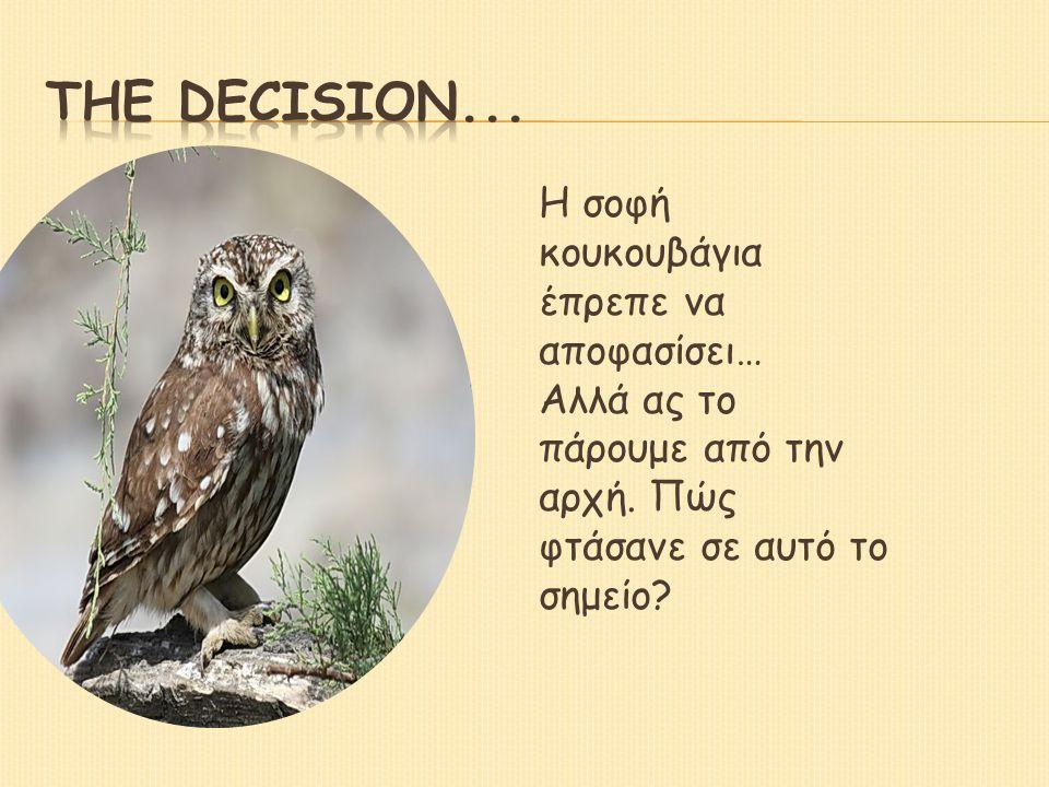 The decision... Η σοφή κουκουβάγια έπρεπε να αποφασίσει…