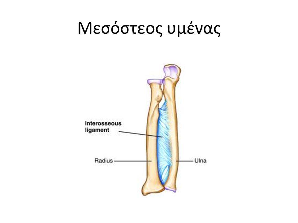 Μεσόστεος υμένας