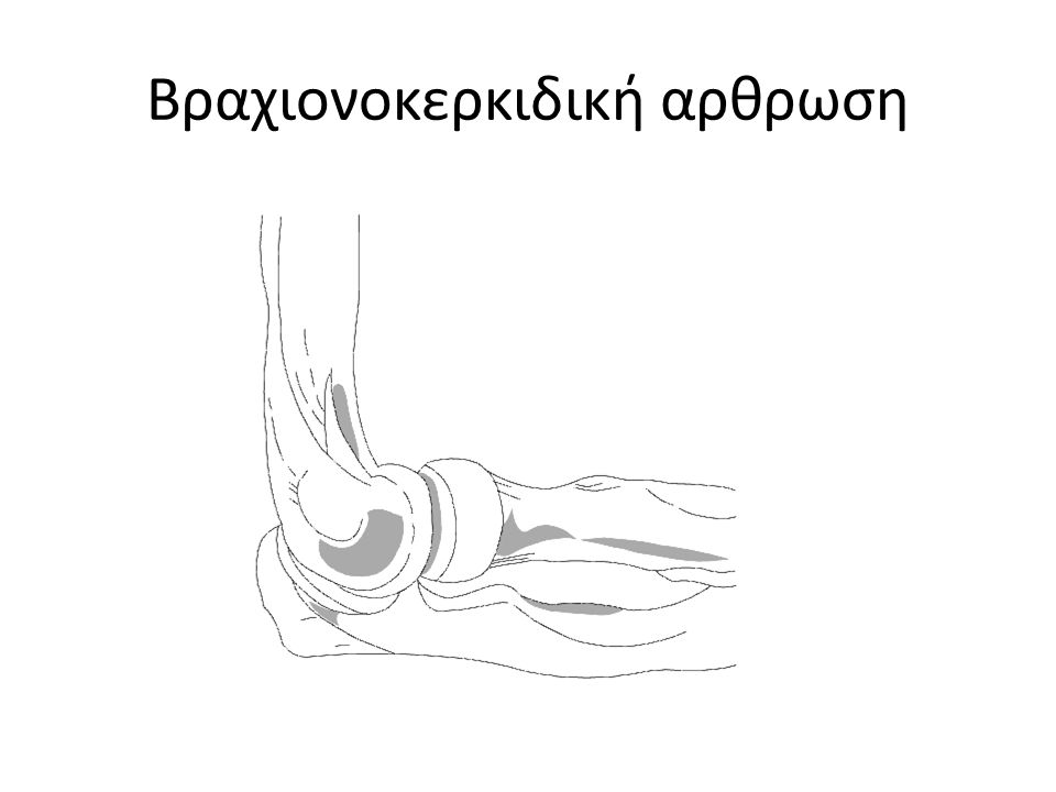 Βραχιονοκερκιδική αρθρωση