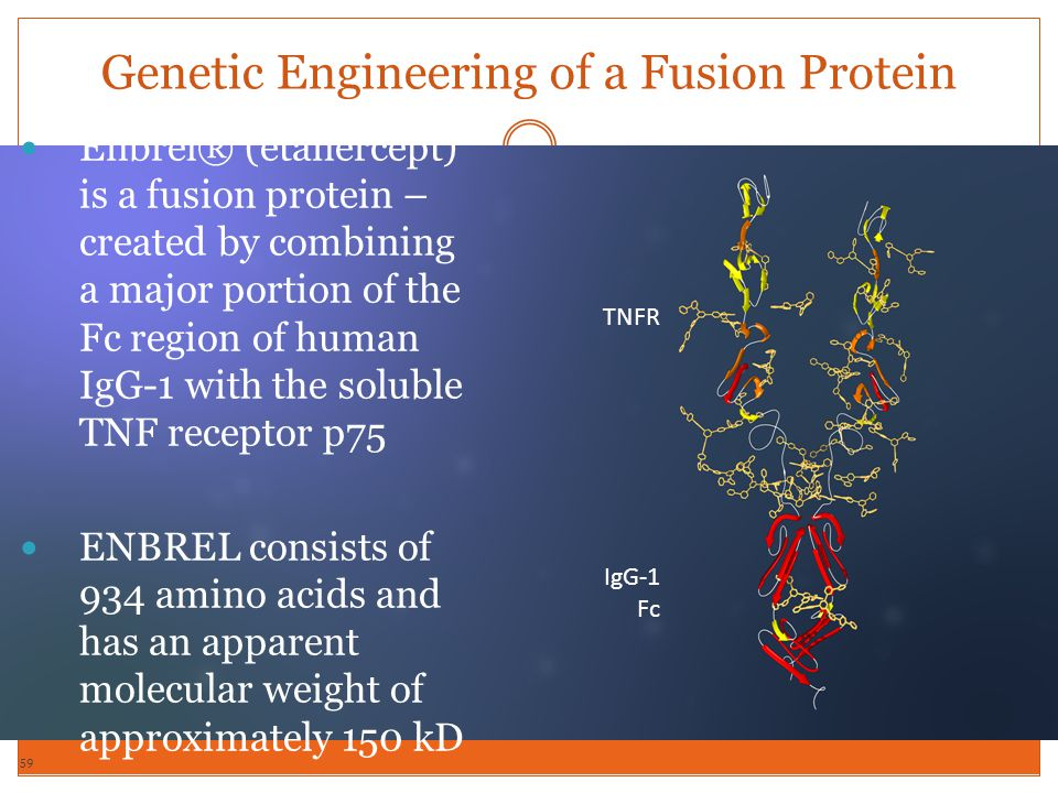 Genetic Engineering of a Fusion Protein