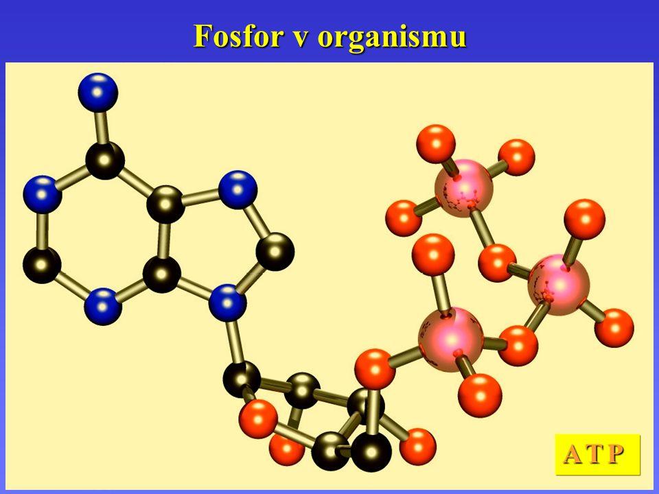 Fosfor v organismu A T P