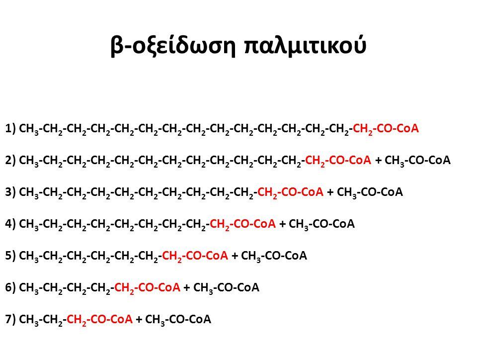 β-οξείδωση παλμιτικού