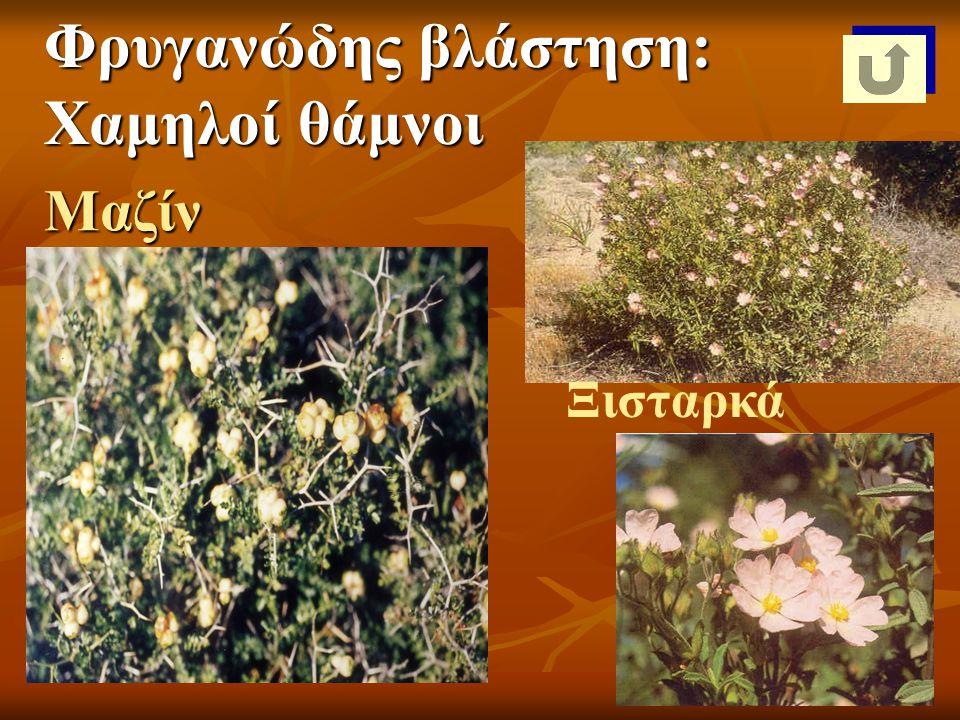 Φρυγανώδης βλάστηση: Χαμηλοί θάμνοι