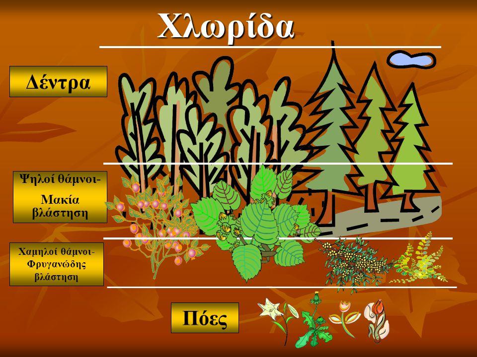 Χαμηλοί θάμνοι-Φρυγανώδης βλάστηση