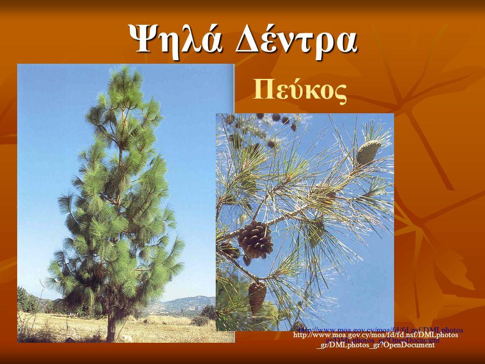 Ψηλά Δέντρα Πεύκος http://www.moa.gov.cy/moa/fd/fd.nsf/DMLphotos_gr/DMLphotos_gr OpenDocument