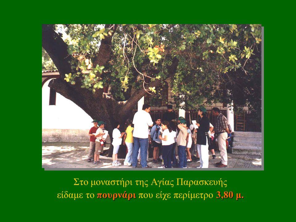 Στο μοναστήρι της Αγίας Παρασκευής