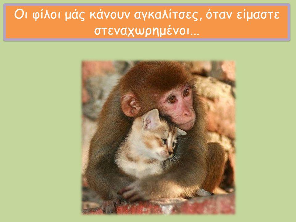 Οι φίλοι μάς κάνουν αγκαλίτσες, όταν είμαστε στεναχωρημένοι...