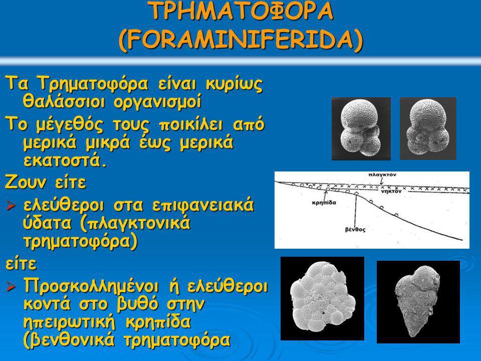 ΤΡΗΜΑΤΟΦΟΡΑ (FORAMINIFERIDA)