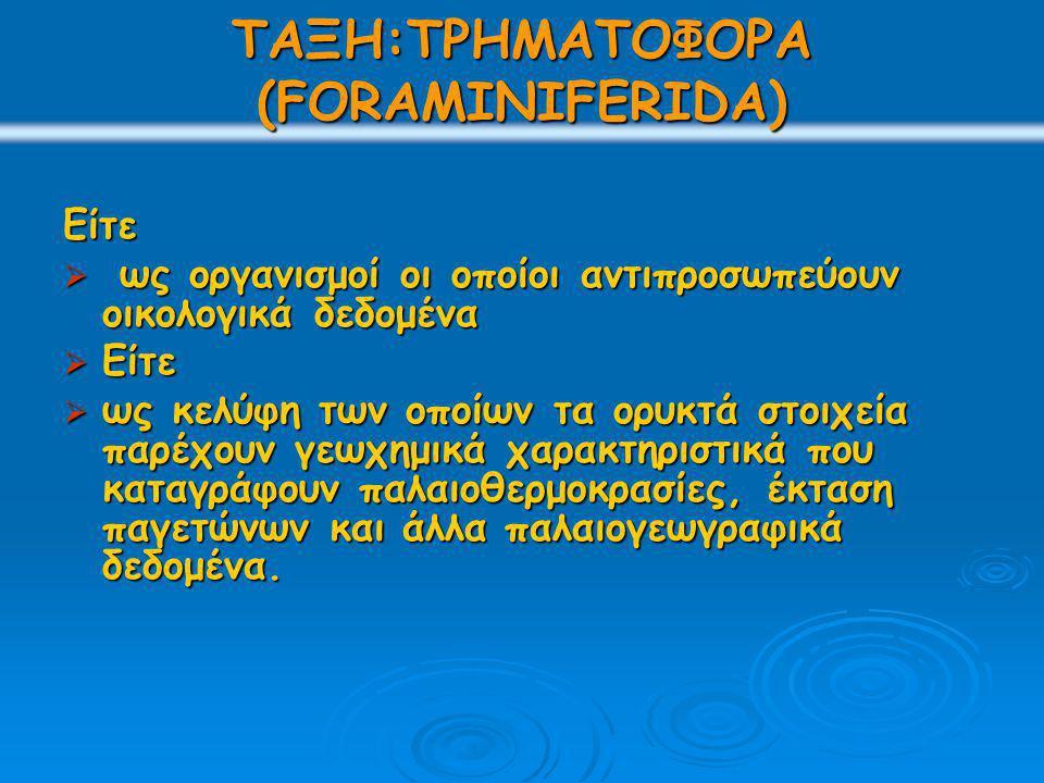 ΤΑΞΗ:ΤΡΗΜΑΤΟΦΟΡΑ (FORAMINIFERIDA)