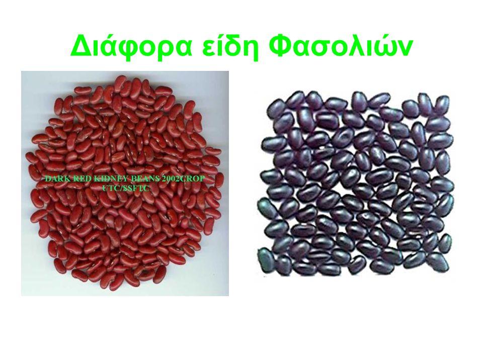Διάφορα είδη Φασολιών