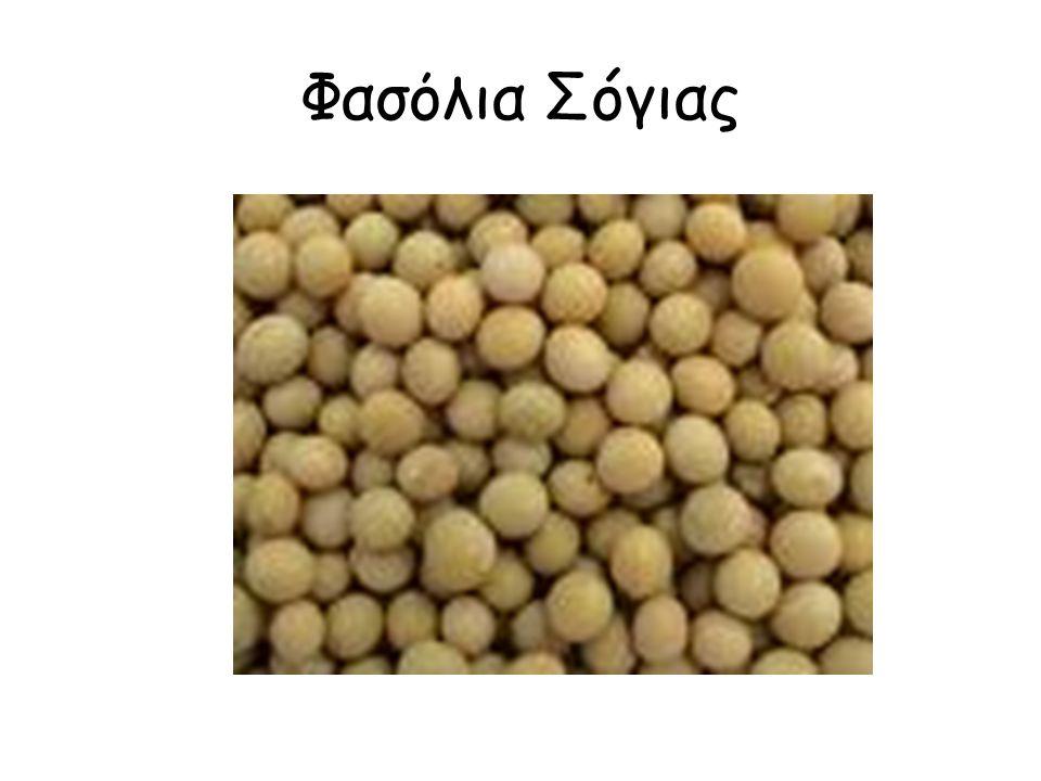 Φασόλια Σóγιας
