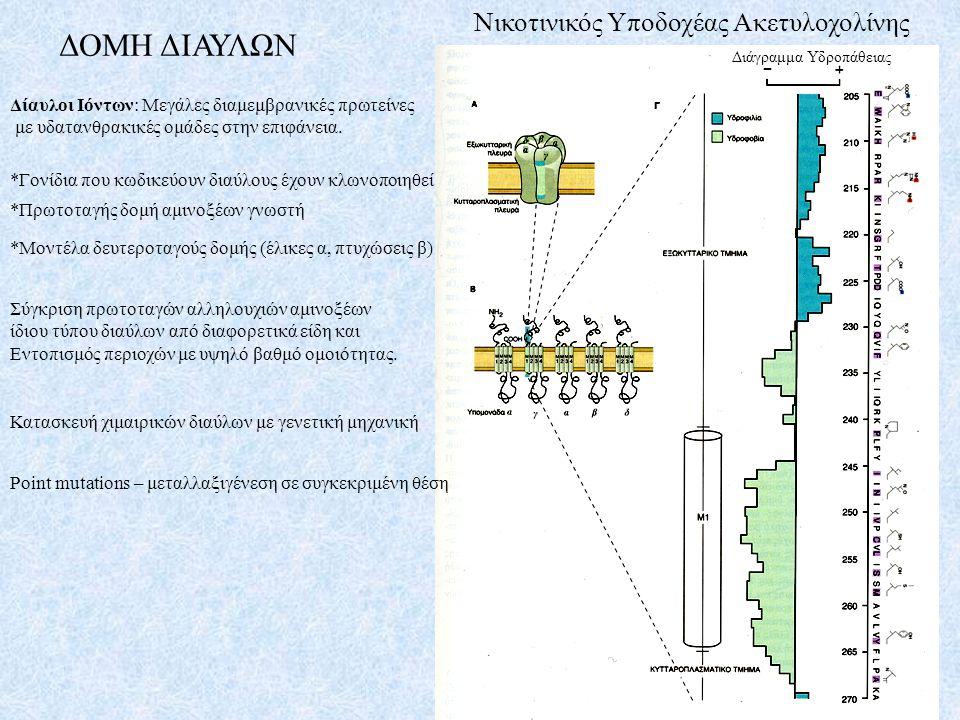ΔΟΜΗ ΔΙΑΥΛΩΝ Νικοτινικός Υποδοχέας Ακετυλοχολίνης