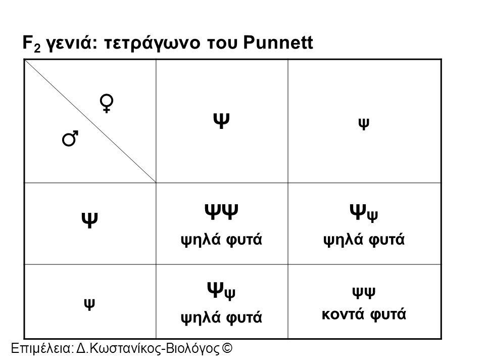 F2 γενιά: τετράγωνο του Punnett