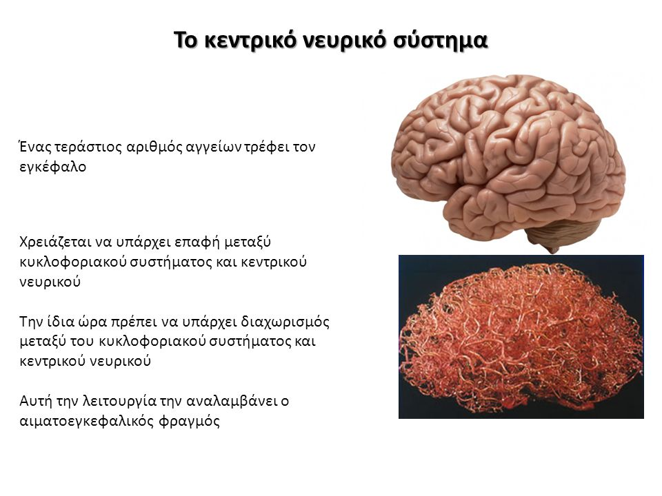 Το κεντρικό νευρικό σύστημα