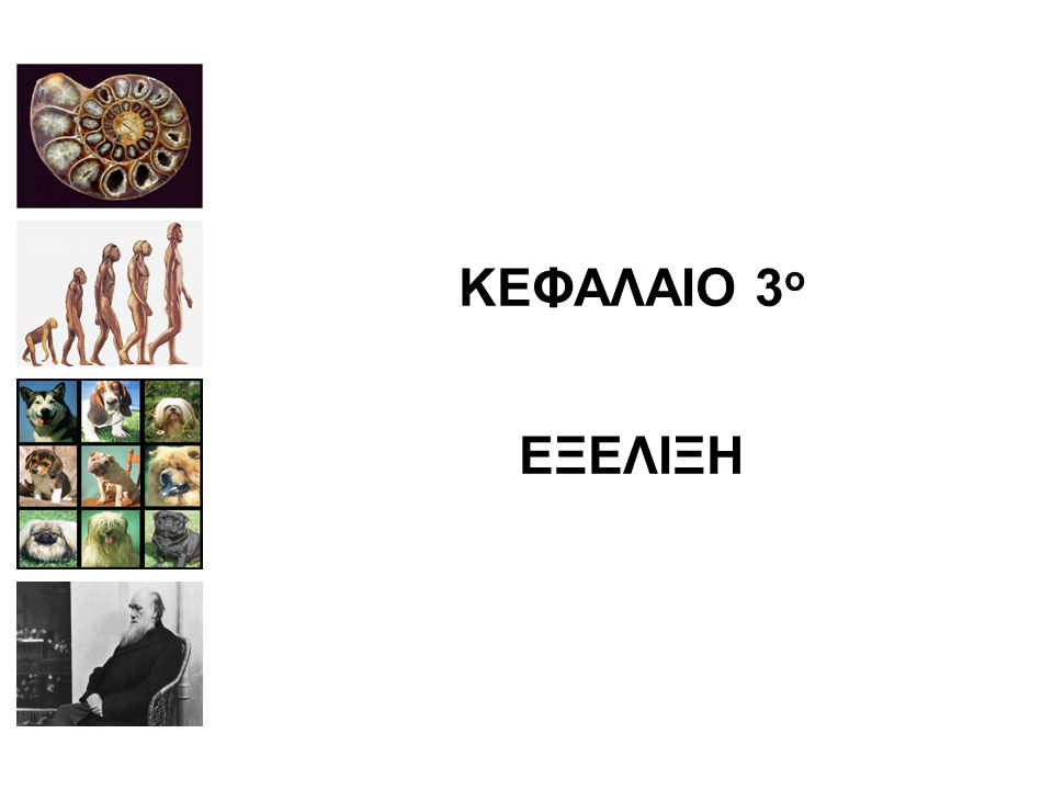 ΚΕΦΑΛΑΙΟ 3ο ΕΞΕΛΙΞΗ