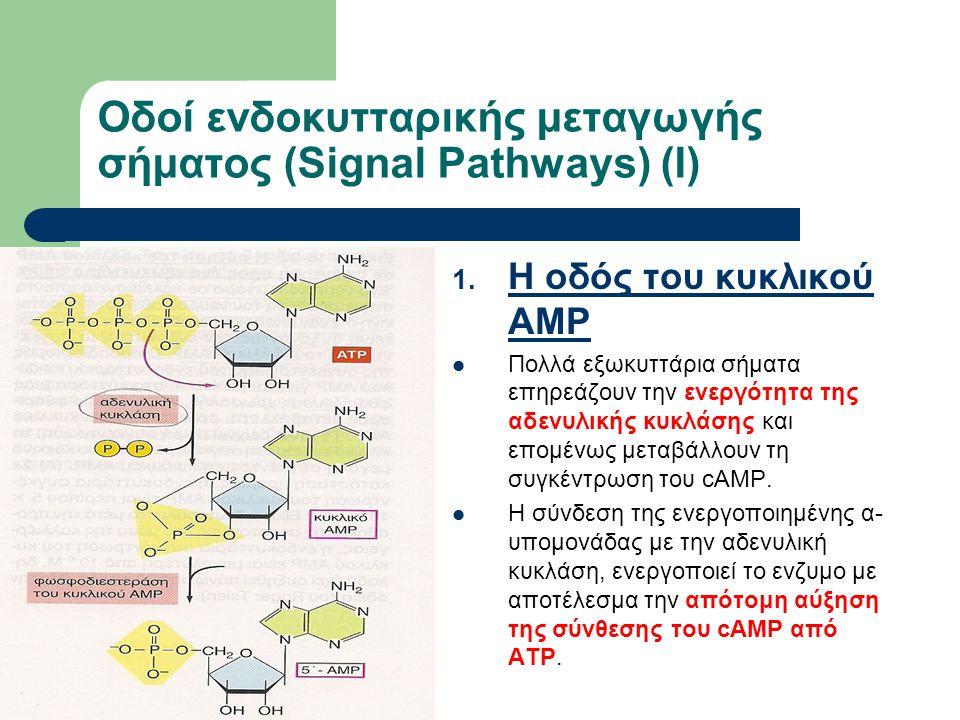 Οδοί ενδοκυτταρικής μεταγωγής σήματος (Signal Pathways) (Ι)