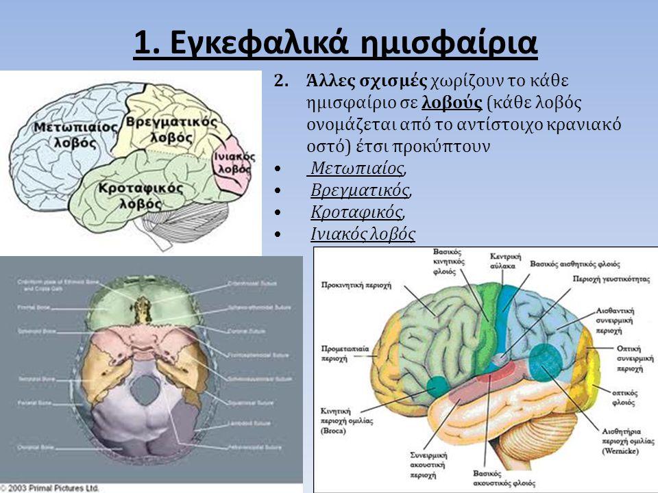 1. Εγκεφαλικά ημισφαίρια