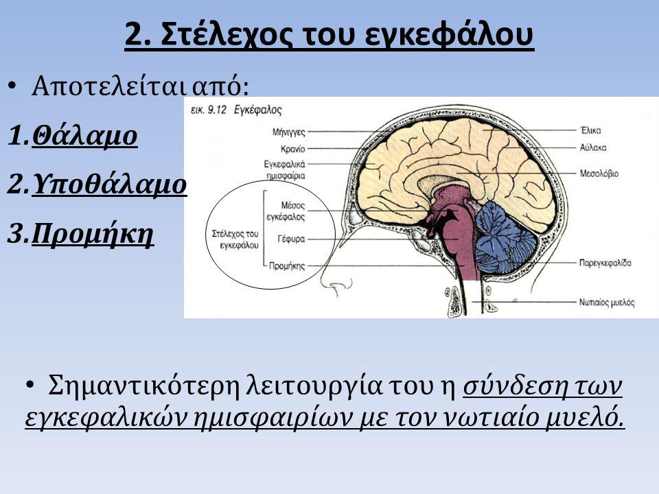 2. Στέλεχος του εγκεφάλου