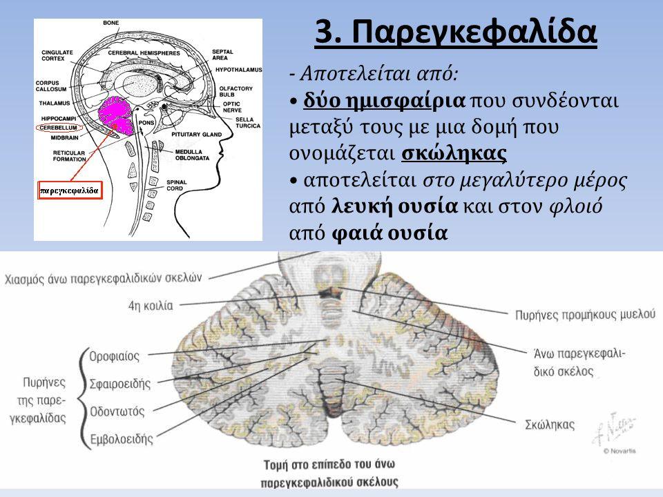 3. Παρεγκεφαλίδα - Αποτελείται από: