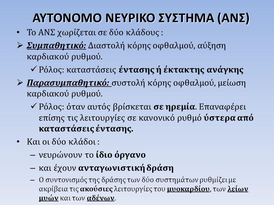 ΑΥΤΟΝΟΜΟ ΝΕΥΡΙΚΟ ΣΥΣΤΗΜΑ (ΑΝΣ)
