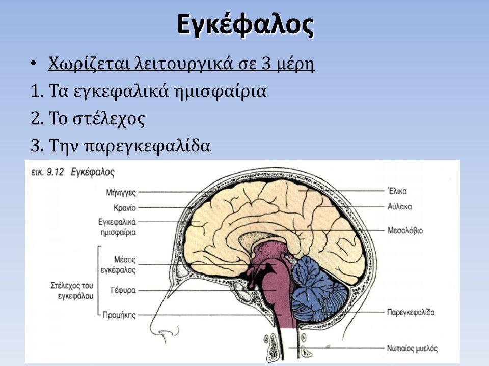 Εγκέφαλος Χωρίζεται λειτουργικά σε 3 μέρη Τα εγκεφαλικά ημισφαίρια