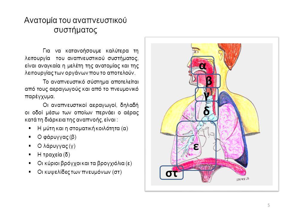 Ανατομία του αναπνευστικού συστήματος