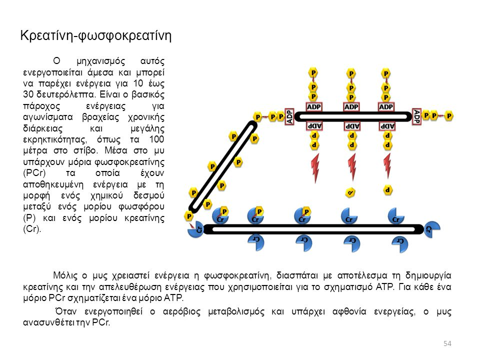 Κρεατίνη-φωσφοκρεατίνη