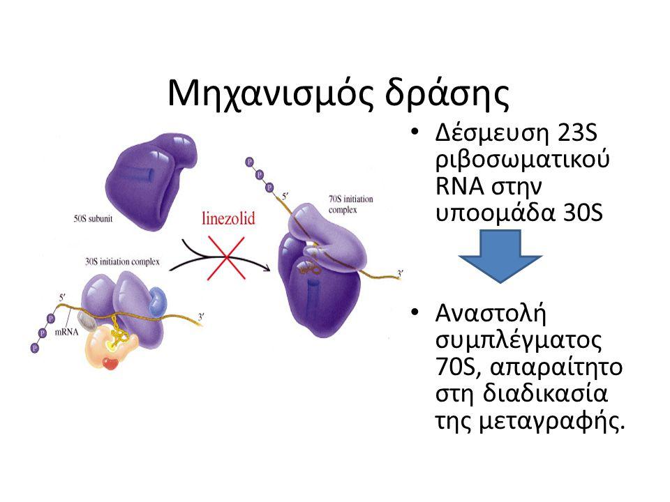 Μηχανισμός δράσης Δέσμευση 23S ριβοσωματικού RNA στην υποομάδα 30S