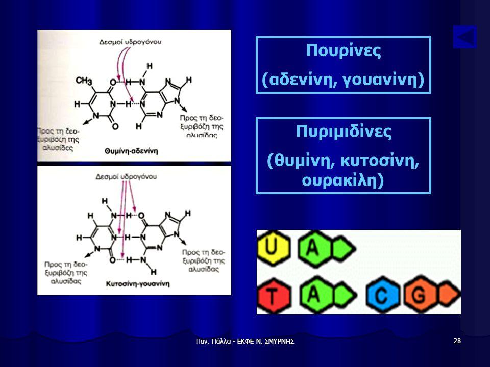 (θυμίνη, κυτοσίνη, ουρακίλη)