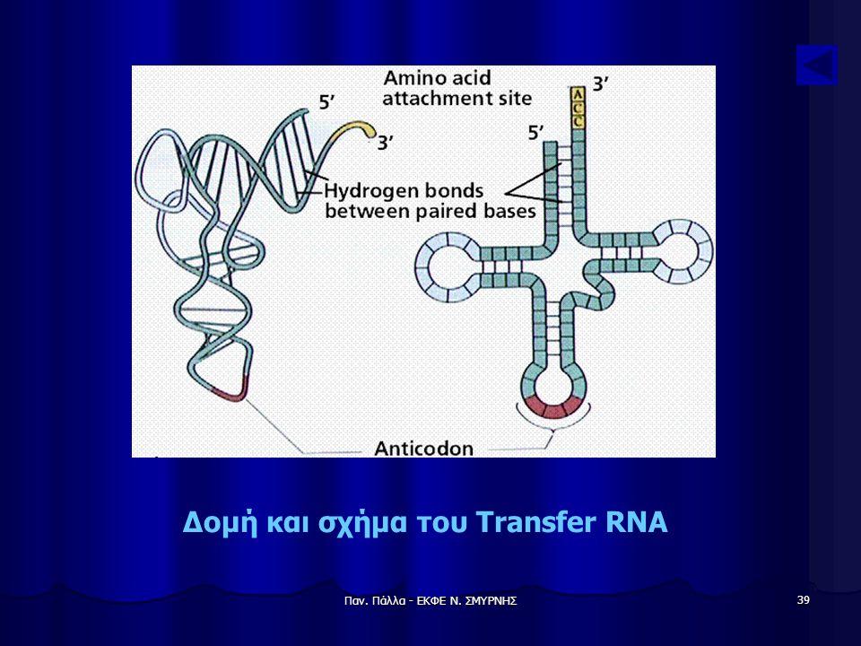 Δομή και σχήμα του Transfer RNA