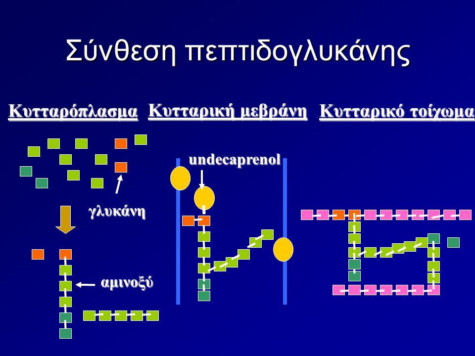 Σύνθεση πεπτιδογλυκάνης