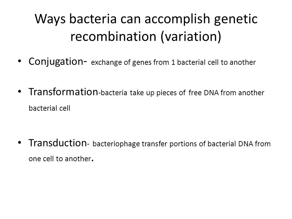 Ways bacteria can accomplish genetic recombination (variation)