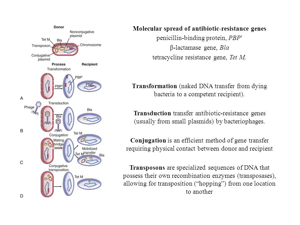 Molecular spread of antibiotic-resistance genes