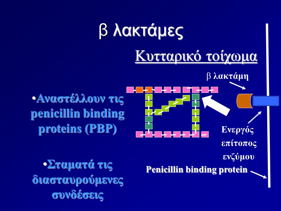 β λακτάμες Κυτταρικό τοίχωμα