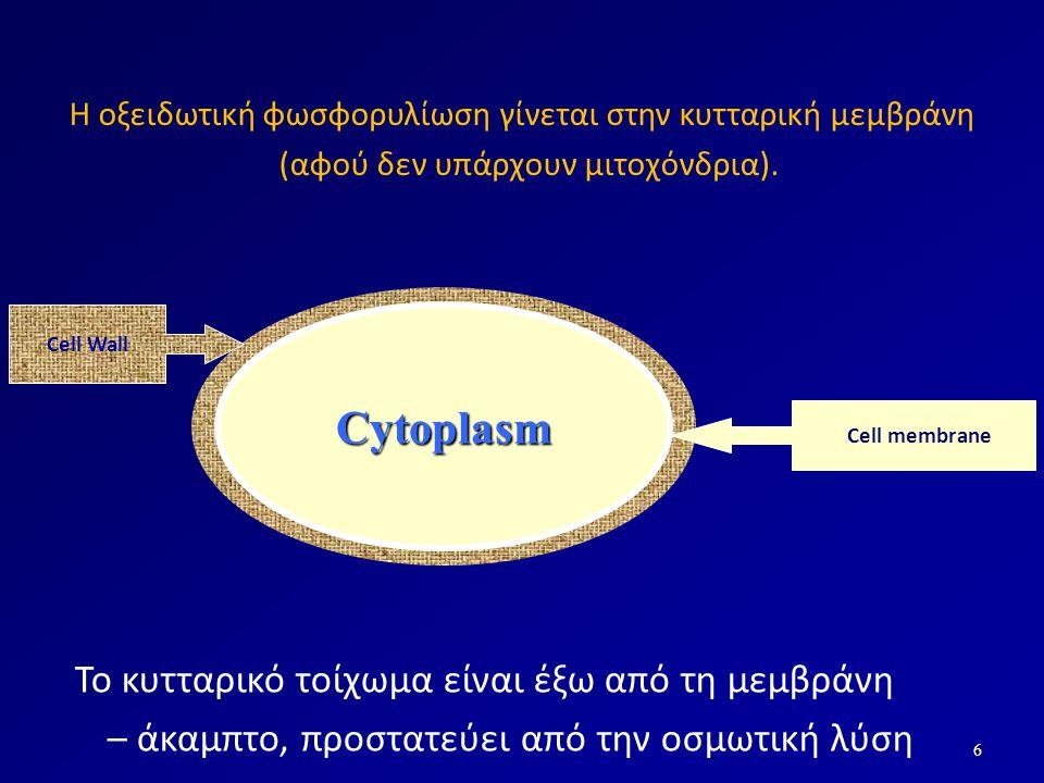 Cytoplasm Το κυτταρικό τοίχωμα είναι έξω από τη μεμβράνη