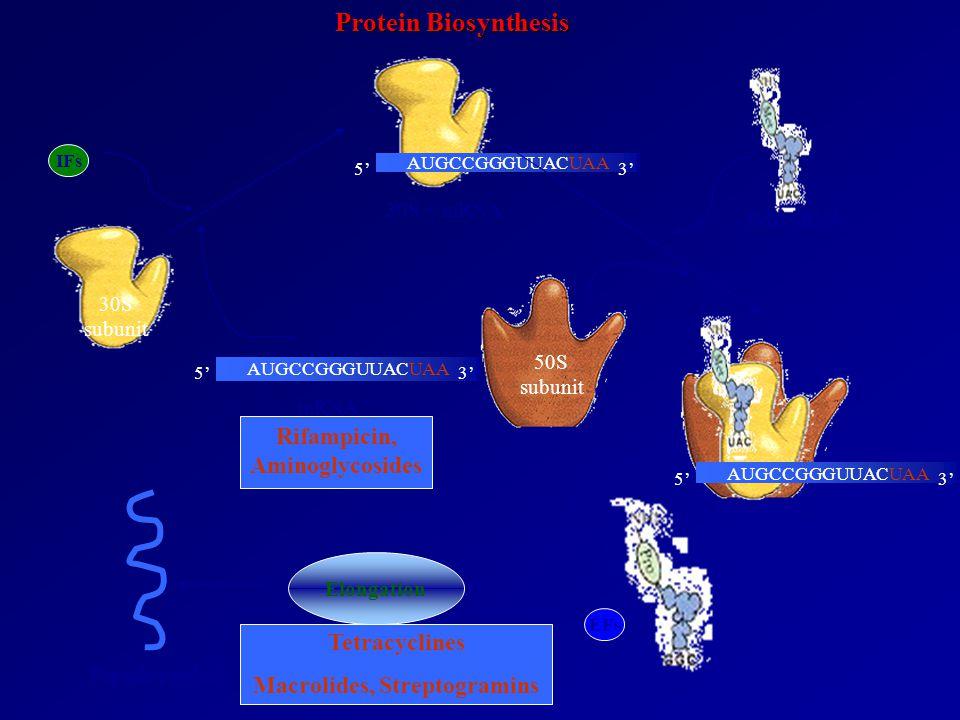 Rifampicin, Aminoglycosides Macrolides, Streptogramins