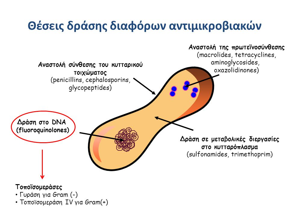 Θέσεις δράσης διαφόρων αντιμικροβιακών