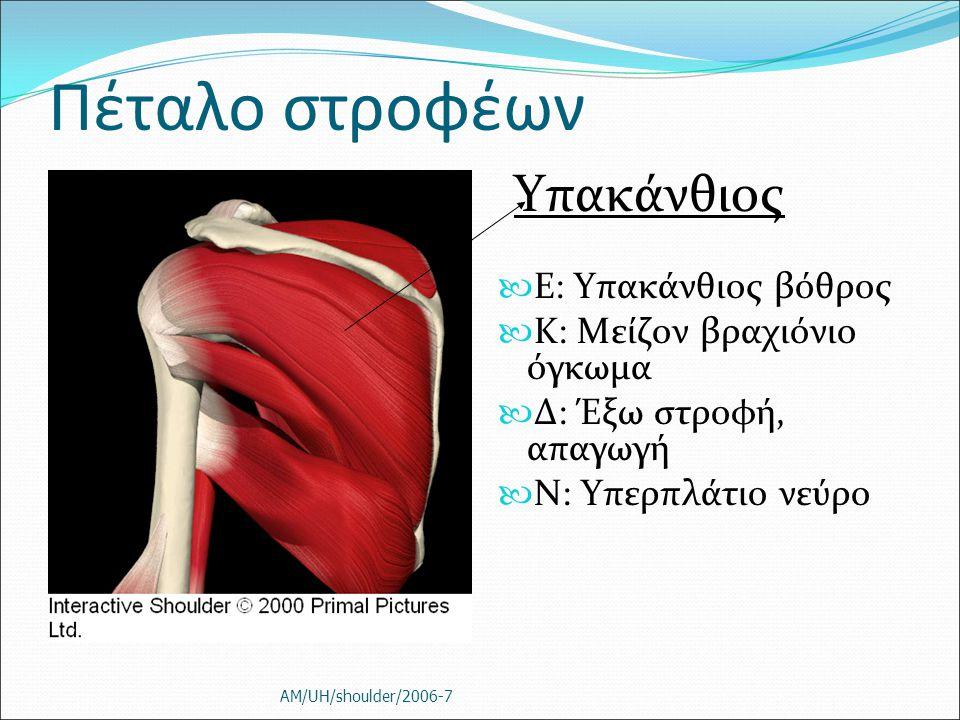 Πέταλο στροφέων Ε: Υπακάνθιος βόθρος K: Μείζον βραχιόνιο όγκωμα