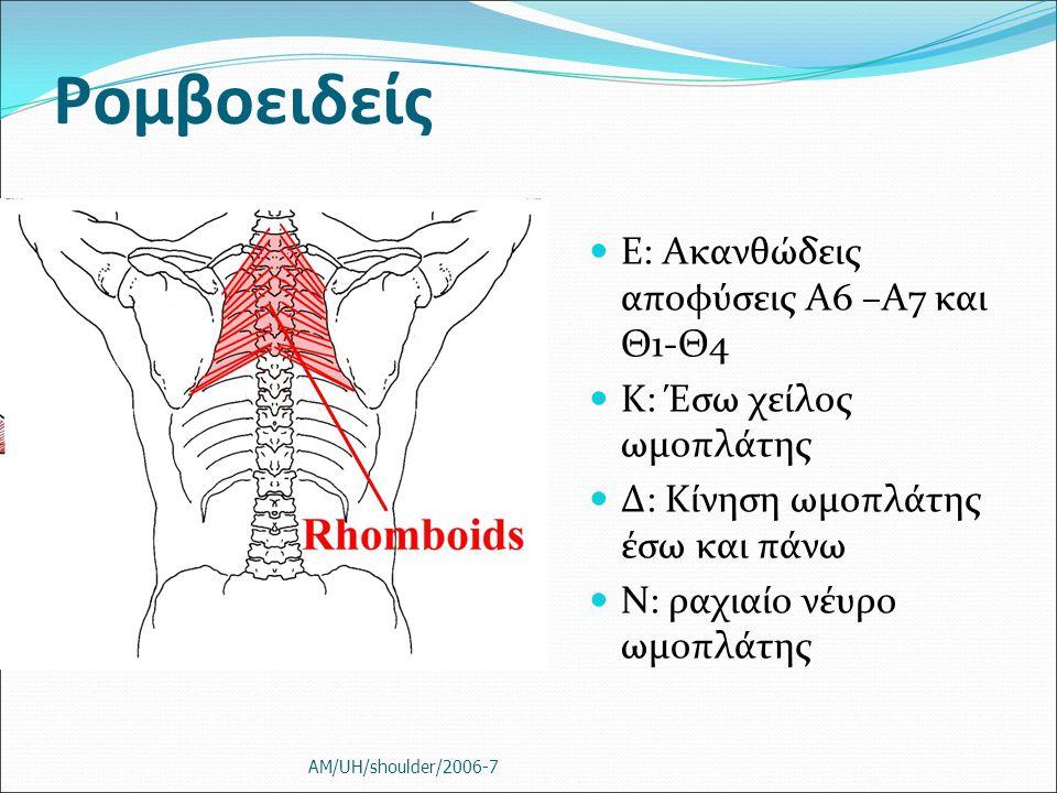 Ρομβοειδείς Ε: Ακανθώδεις αποφύσεις Α6 –Α7 και Θ1-Θ4