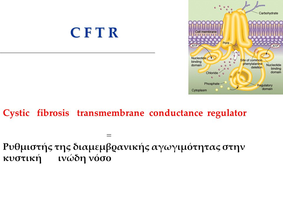 C F T R Cystic fibrosis transmembrane conductance regulator =