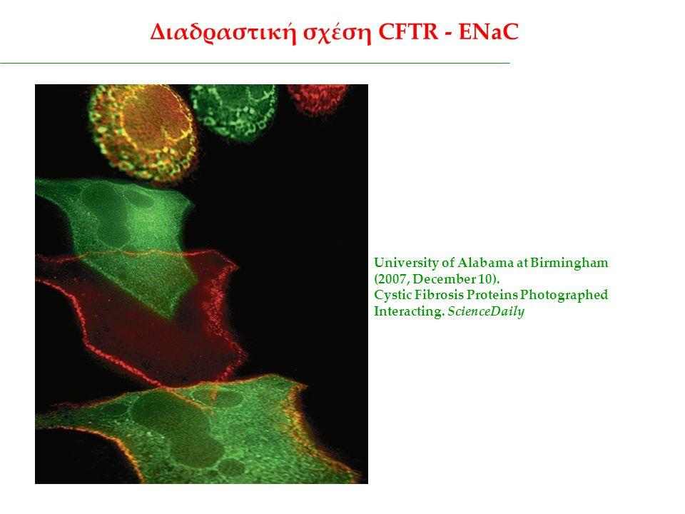 Διαδραστική σχέση CFTR - ENaC